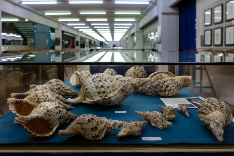 Cupra Marittima - Museo Malacologico Piceno